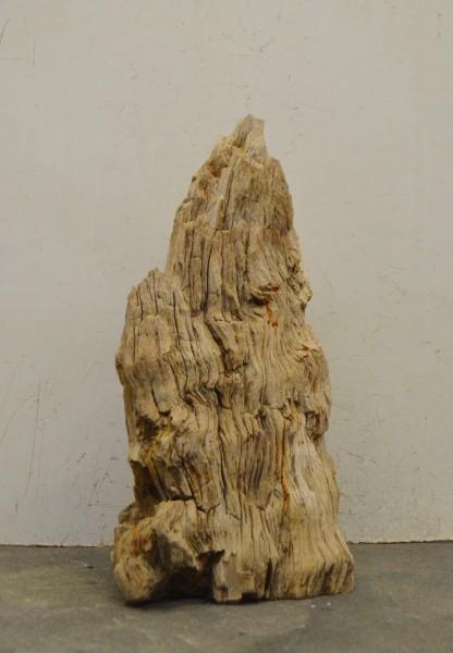 Versteinertes Holz HZ16689