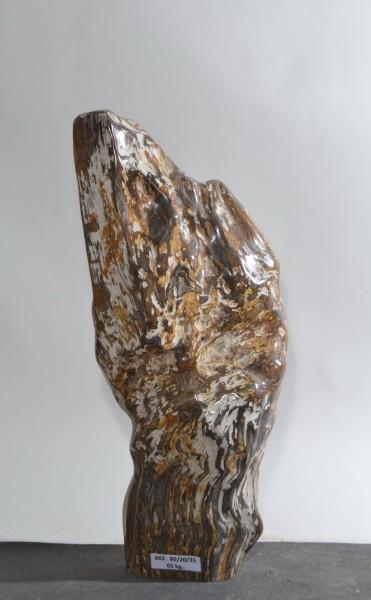 Versteinertes Holz HZ15848