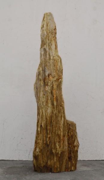 Versteinertes Holz HZ16704