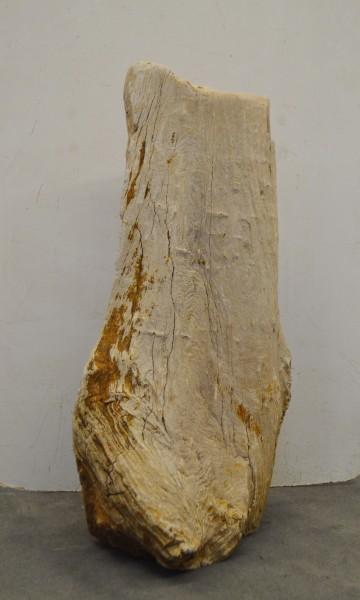 Versteinertes Holz HZ16691