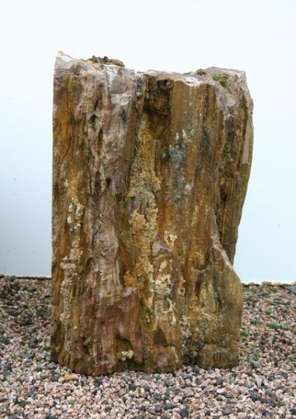 Versteinertes Holz HZ0063