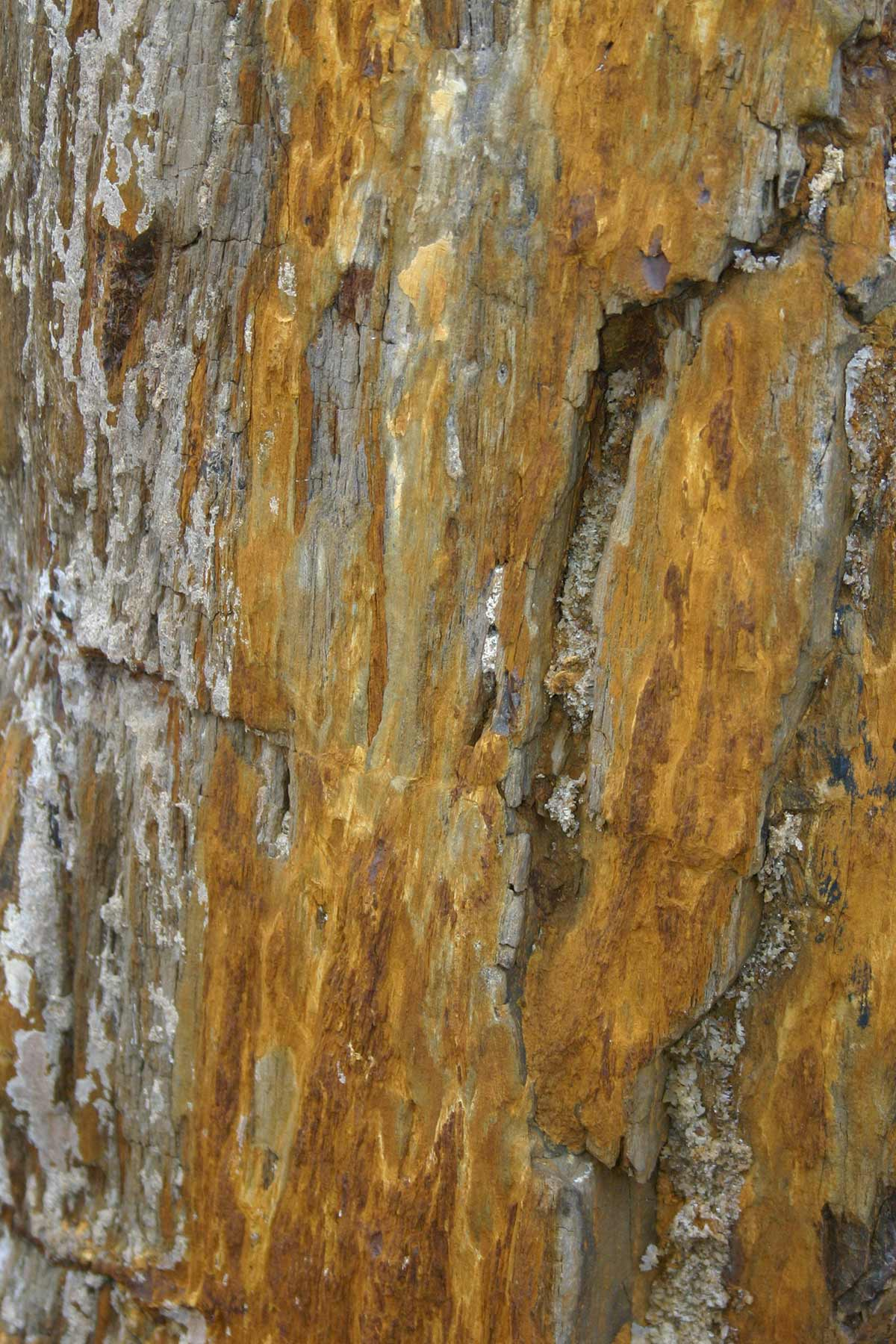Versteinertes Holz gespalten