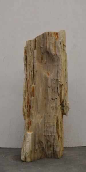 Versteinertes Holz HZ16683